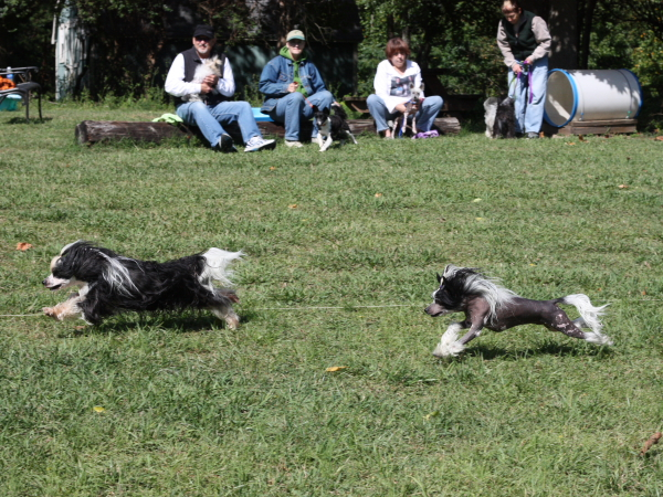 Chinese Crested Fun Day